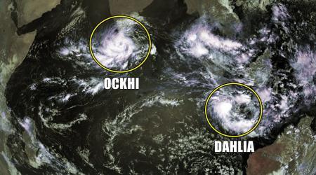 Dahlia ockhi