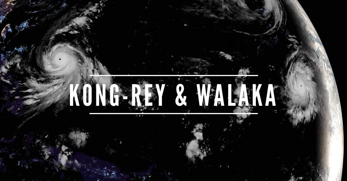 Kong rey walaka