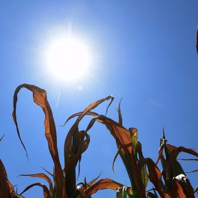Mois de mars le plus chaud depuis 50 ans