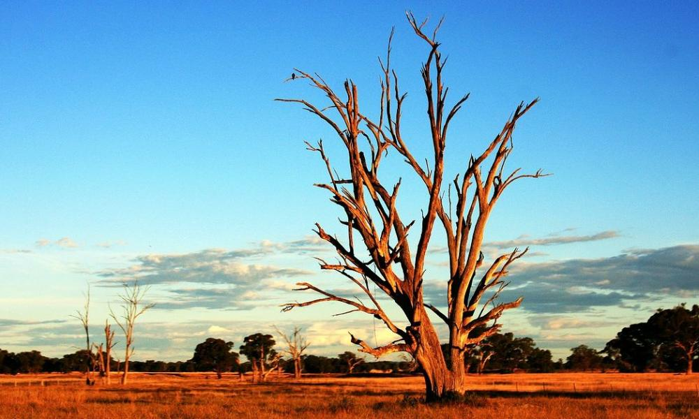 vague de chaleur en australie