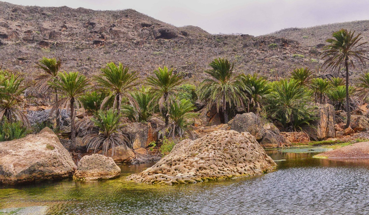 Oasis sur Socotra